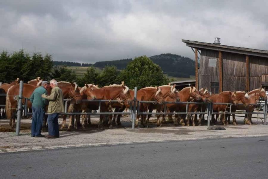 Le concours de chevaux de trait aux Estables en images