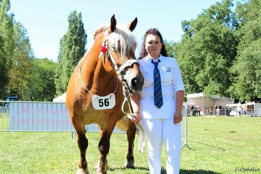 Onze éleveurs de chevaux comtois de Haute-Loire au concours du Massif Central