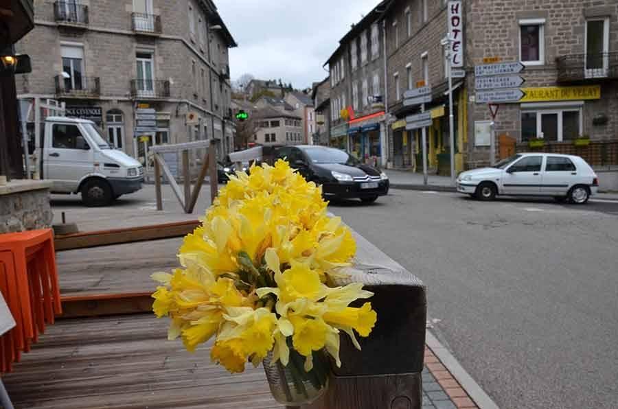 Chambon-sur-Lignon : la Fête des jonquilles est annulée