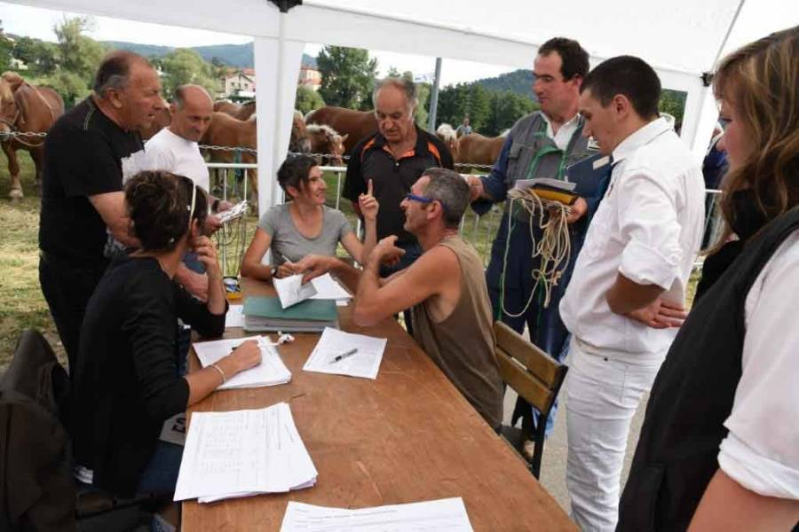Retournac : 19 juments qualifiées pour le Sommet de l'élevage à Cournon
