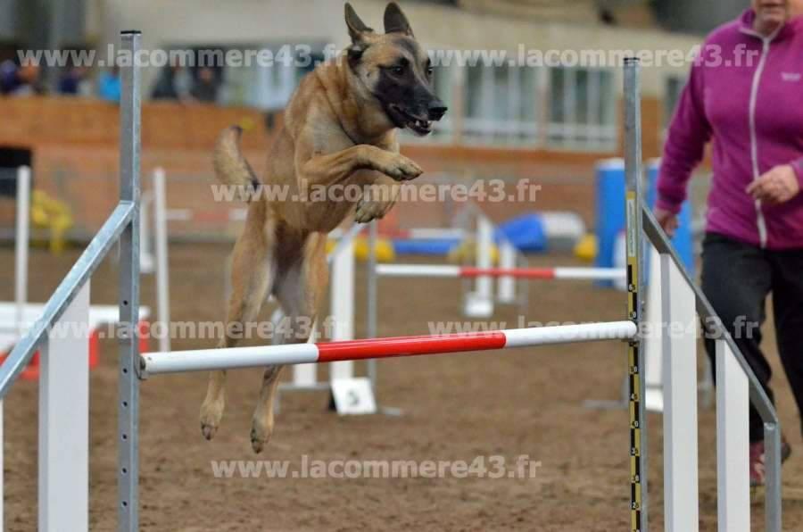 Des chiens super-héros à Yssingeaux