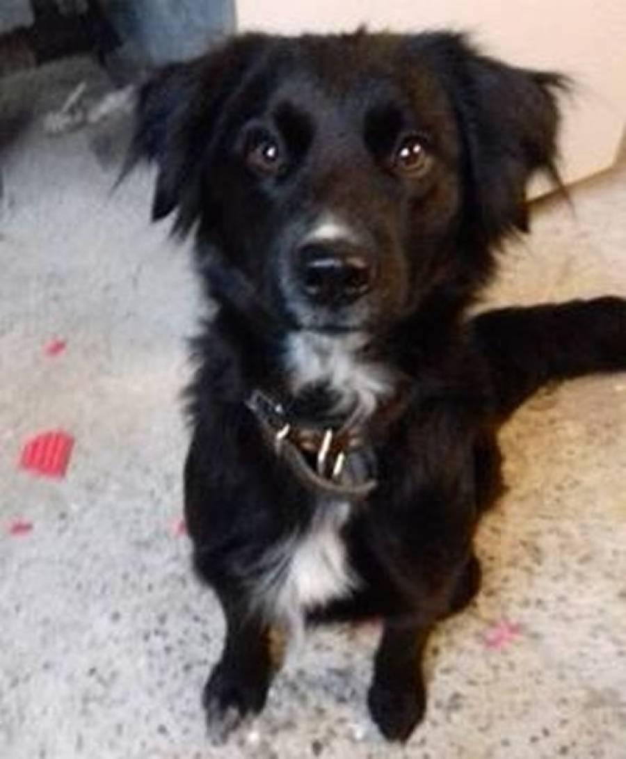 Une chienne trouvée à Saint-Agrève