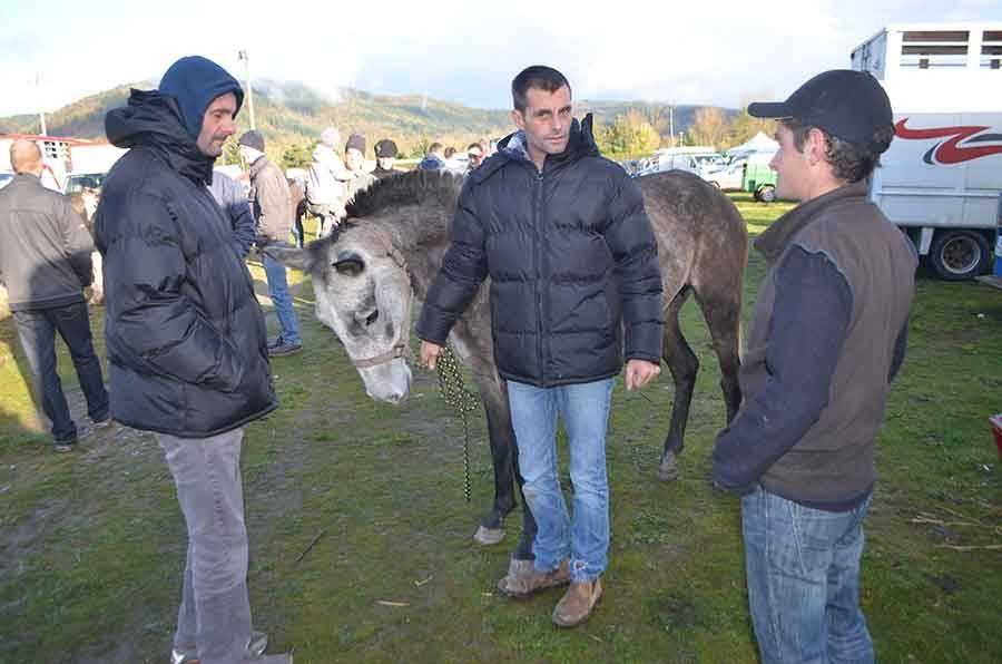 La foire aux ânes de Bas-en-Basset en images