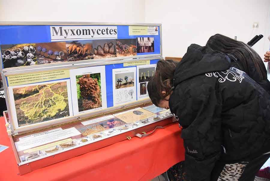 Le champignon sous toutes les coutures au Mycélium de Saint-André-en-Vivarais