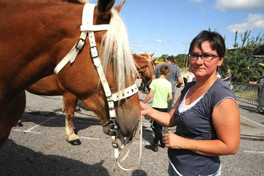 Cinquante juments comtoises au concours de chevaux lourds d'Yssingeaux