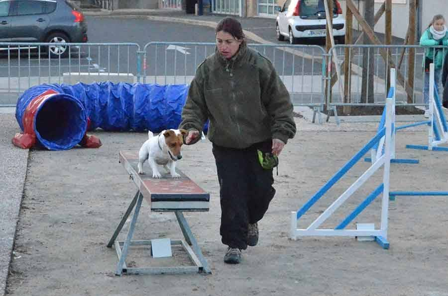 Démonstration d'agility par le club canin.