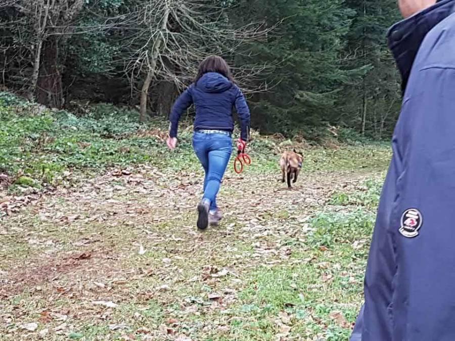 Une démonstration de chien de sauvetage à Yssingeaux.
