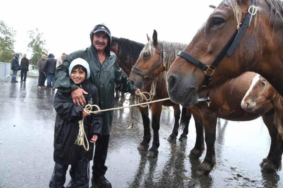 51 pouliches sous une pluie battante au concours d'Yssingeaux