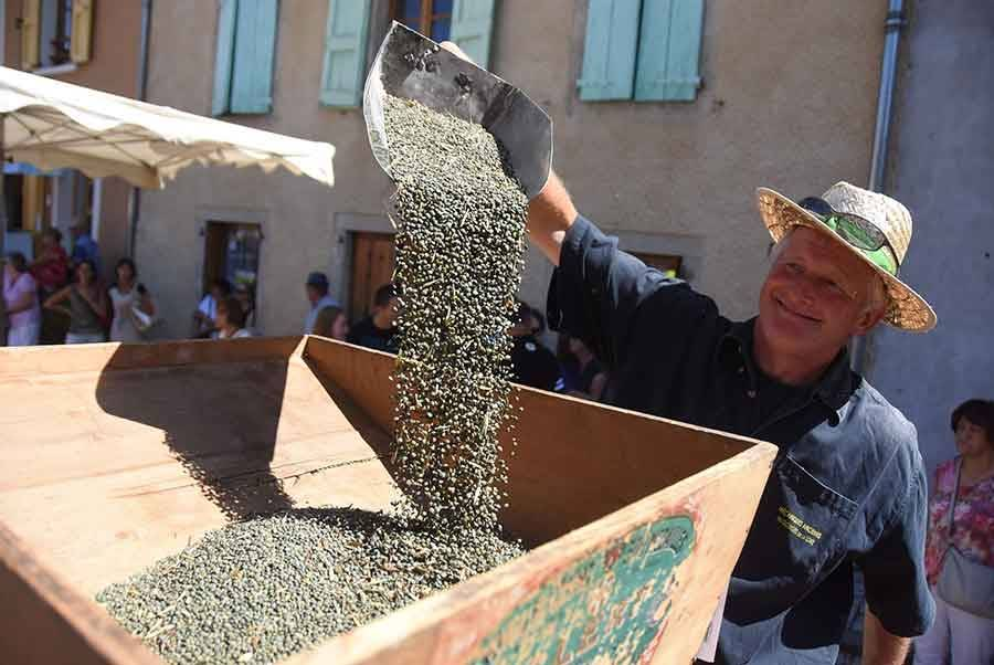 La lentille, l'or vert Made in Rosières (vidéo)