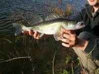 Ouverture de la pêche du sandre 2e catégorie samedi