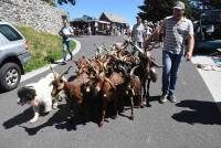 Saint-Front : la chèvre du Massif Central est la star du jour