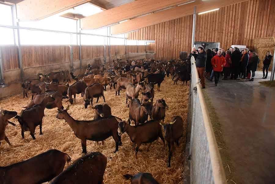 """Saint-Jeures : la ferme du Fromental va développer un élevage de porcs en """"bio"""""""