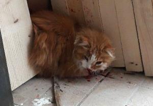 Le Puy-en-Velay : Le Jardin des chats recherche le propriétaire d'un chat accidenté