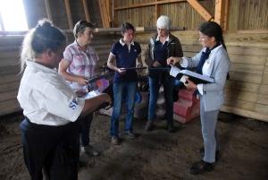 Equitation : des poulains et juments jugés au concours modèles et allures à Yssingeaux