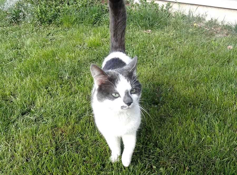 Saint-Front : un chat recueilli