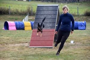 Education canine : l'agility, une discipline très populaire chez les maîtres