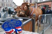 L'animal de l'élevage de Rémi Croze a remporté le 1er prix à la Foire grasse des Estables jeudi 10 mars.