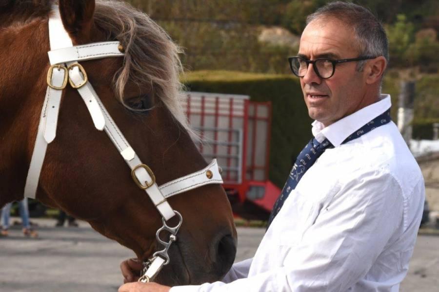 Yssingeaux : un concours de chevaux lourds réservé aux mâles
