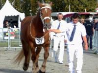 Les juments comtoises de Haute-Loire en évidence au Sommet de l'élevage