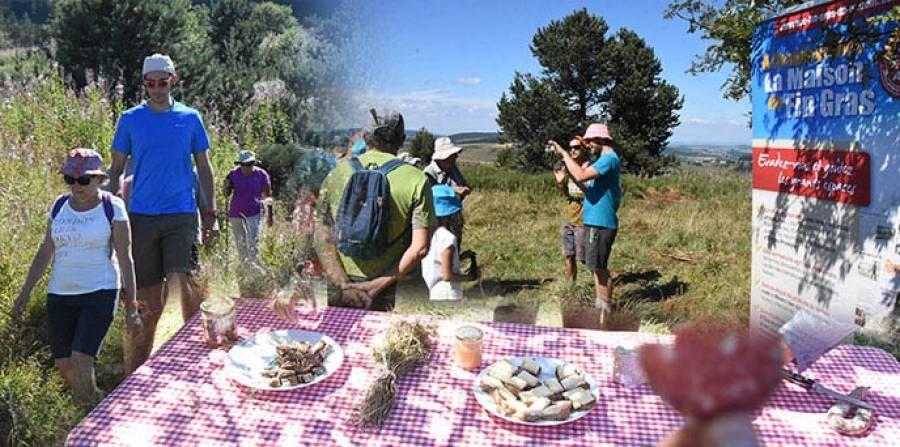 Goûtez les sentiers et les spécialités du Mézenc le 16 août avec une balade gourmande