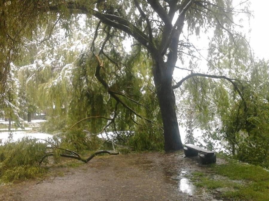 Beaucoup de casse pour la végétation, ici au Puy-en-Velay.