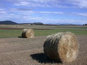 Cultures dérobées : le ministère de l'Agriculture accorde une dérogation en Haute-Loire