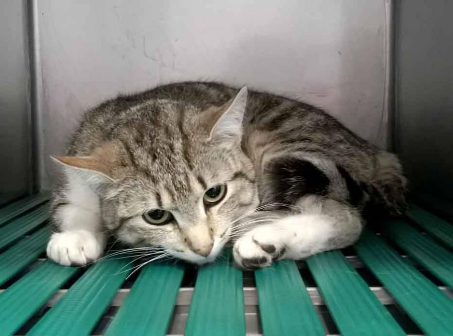 Saint-Christophe-sur-Dolaison : un appel aux dons pour sauver un chat