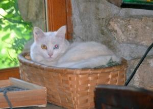 Alaska, chaton blanc sourd, promis à l'euthanasie, vit des jours paisibles à Saint-Etienne