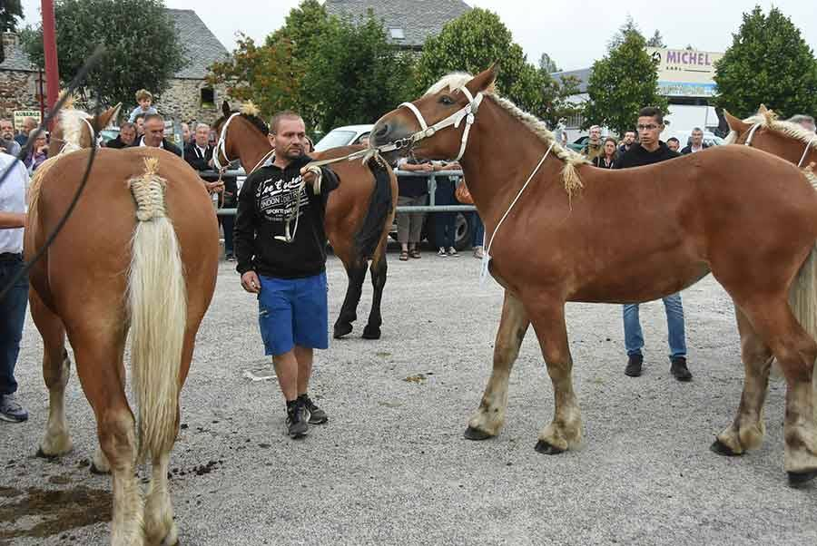 Les Estables : 37 belles comtoises paradent au concours des chevaux lourds