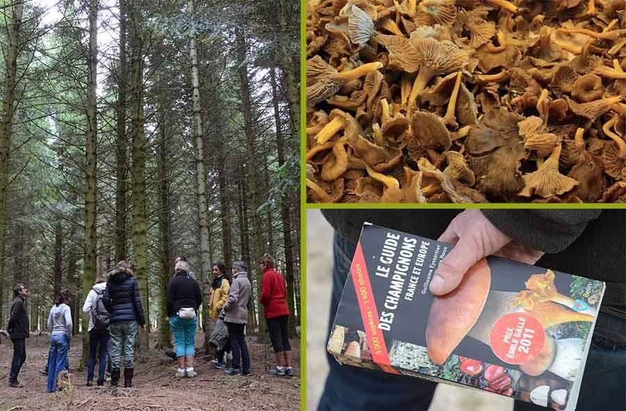 On trouve encore des champignons dans les bois