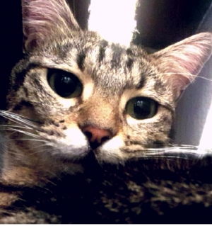Puy-en-Velay : un chat perdu depuis deux semaines