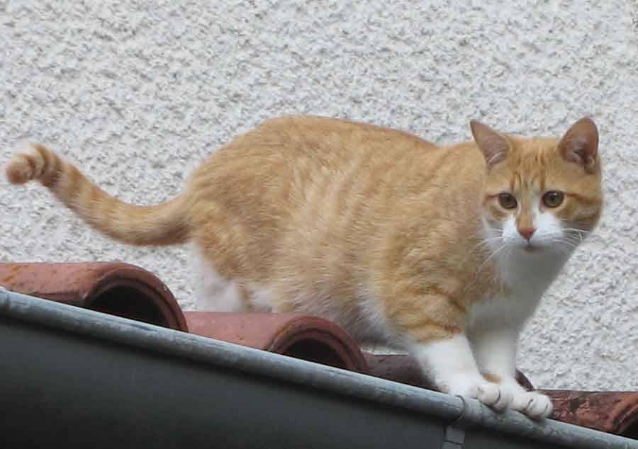"""Le Jardin des chats : """"Petit Poucet"""" cherche un foyer - La ..."""