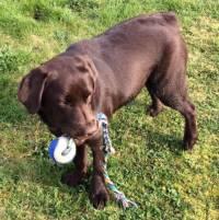 Chambon-sur-Lignon : un chien recueilli samedi après-midi