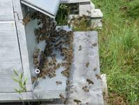 Craponne-sur-Arzon : une réunion pour présenter le Groupement de défense sanitaire apicole