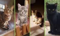 Saint-Christophe-sur-Dolaizon : la maltraitance animale par négligence en question