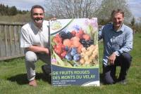 Fruits rouges des Monts du Velay : on mise sur framboise, myrtille et … rhodiole