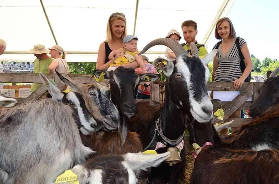 Chaque été, la chèvre est la star d'une fête à Saint-Front.