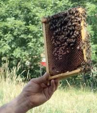 Très impressionnant de voir le cadre avec les abeilles encore affairées dessus.