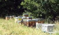 Les ruches voyagent dans différents environnements pour donner divers miels.