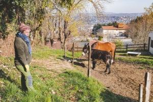 Le Puy-en-Velay : la vie continue à la Ferme D4 Saisons avec la naissance d'un chevreau