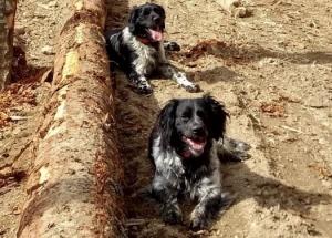 Raucoules : deux chiens de chasse volés deux fois en une semaine