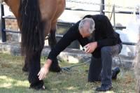Saint-Jeures : des chevaux, des hommes et des passions