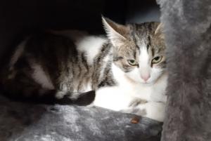 Deux chats perdus secteur Chatimbarbe à Yssingeaux