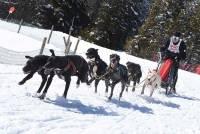 Les Estables : les mushers à pattes de géants au Mézenc