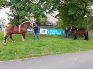 Les étalons referment les concours de chevaux lourds de Haute-Loire