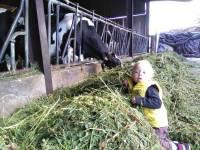 Bas-en-Basset : les bambins de la crèche visitent une ferme
