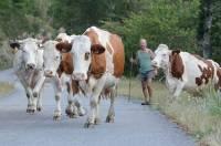Les Jeunes Agriculteurs de Haute-Loire lancent un concours photos