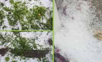 Un orage de grêles dévaste les potagers dans l'Yssingelais
