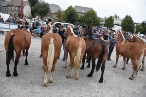 Les Estables : première foire aux chevaux de la saison le 19 septembre