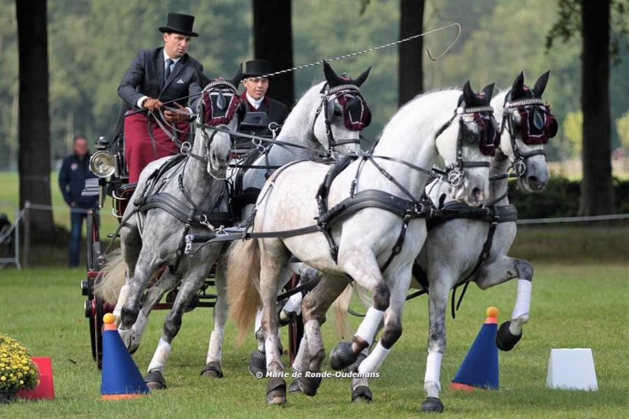 Le Duniérois Sébastien Mourier fait briller l'équipe de France d'attelages à quatre chevaux